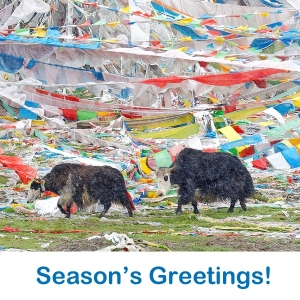 Save time and money by sending ethical eCards