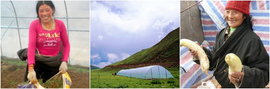 Tibet Relief Fund annual review: The Greenhouse Effect